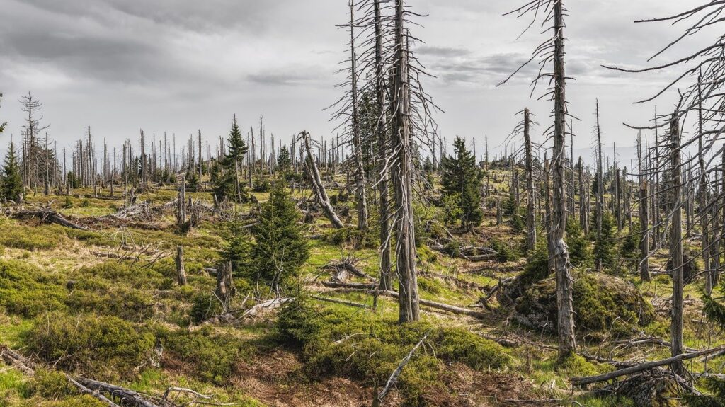 bavarian forest, forest, trees